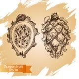 Vector illustration sketch - dragon fruit. Illustration - pitaya. Vector illustration sketch - dragon fruit. Illustration - pitaya card hand drawn Royalty Free Stock Images
