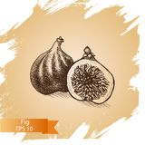 Vector illustration sketch fig. Illustration - exotic fruit. Vector illustration sketch fig. Illustration - exotic fruit card hand drawn Stock Images