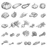 Vector illustration sketch set of vegetables Royalty Free Stock Photos