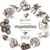 Vector illustration sketch of vegetables. Tomato, Peas, broccoli, asparagus, artichoke, cabbage, eggplant, avocado, arugula, basil. Vector illustration sketch of Stock Photography