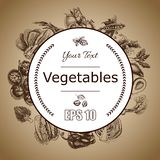 Vector illustration sketch of vegetables. Tomato, Peas, broccoli, asparagus, artichoke, cabbage, eggplant, avocado, arugula, basil. Vector illustration sketch of Stock Images