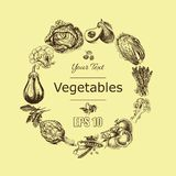 Vector illustration sketch of vegetables. Tomatoe, Peas, broccoli, asparagus, artichoke, cabbage, eggplant, avocado, arugula, bazi. Vector illustration sketch of Royalty Free Stock Photography