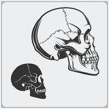 Vector illustration of skulls. Royalty Free Stock Images