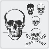 Vector illustration of Skulls and Jolly Roger. Stock Photo