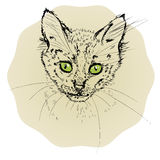 Vector illustration with small cat portrait isolated on bright background royalty free illustration