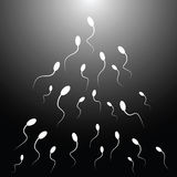 Vector illustration of spermatozoon. (Black and white Royalty Free Stock Photos