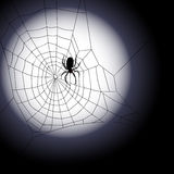 Vector illustration of spiders web Royalty Free Stock Images