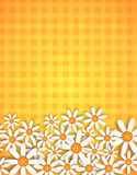 Blossom background Stock Image