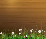 Vector illustration Spring nature background. Green grass and leaf plant Stock Images