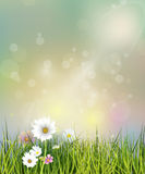 Vector illustration Spring nature field with green grass, white Gerbera, Daisy flowers and wildflowers. At meadow and water drops dew on green leaves, Bokeh Royalty Free Stock Images