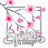 Vector illustration - spring season - cherry blossoms on a background of vintage ribbon with the inscription Spring is coming. Royalty Free Stock Image