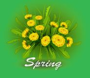 Vector illustration  Springtime on background. With spring flowers .  Dandelions Royalty Free Stock Images