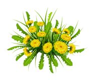 Vector illustration  Springtime on background with spring flowers. Dandelions Royalty Free Stock Photography