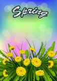 Vector illustration  Springtime on background with spring flowers. Stock Photography