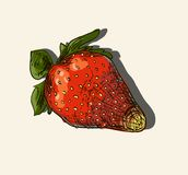 Vector illustration of strawberry Stock Photo