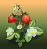 Vector illustration of strawberry bush Stock Photo