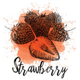 Vector illustration of a strawberry Stock Photos