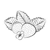 Vector illustration of strawberry surrounded with leaves and flowers. Outline, graphic Royalty Free Stock Photography