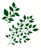 vector illustration of stylized branches with foliage Stock Photo