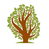 Vector illustration of stylized branchy tree isolated on white Royalty Free Stock Photography