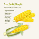 Vector illustration of stylized fresh ripe corn in the cob. Stock Photo