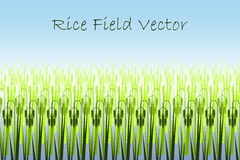 Vector illustration with stylized green rice paddy field. Stock Photography