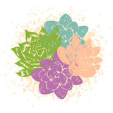 Vector illustration with succulents Royalty Free Stock Images