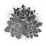 Vector illustration with succulents Royalty Free Stock Image