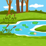 Vector illustration (summer pond in the woods) Stock Photos