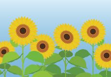 Vector illustration of a sunflower field with flowers and leaves. Under a blue sky Royalty Free Stock Photo