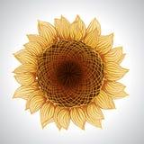 Vector illustration of sunflower. Flower element Stock Photos
