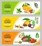 Vector illustration superfood banner template. Healthy detox natural product of camu camu, garcinia cambogia and maca. Carob, ginger, moringa, lucuma, coji vector illustration