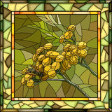 Vector illustration of tansy flowers. Royalty Free Stock Image
