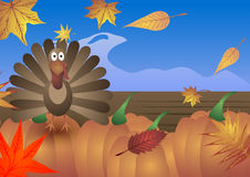 Vector illustration. Thanksgiving Day. Turkey, autumn leafs and pumpkins. Stock Image
