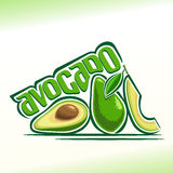 Vector illustration on the theme of avocado Stock Image