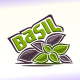 Vector illustration on the theme of  basil Stock Image