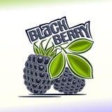 Vector illustration on the theme of blackberry. Abstract vector illustration on the theme of blackberry royalty free illustration