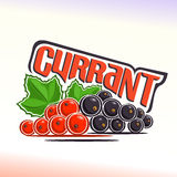 Vector illustration on the theme of currant Royalty Free Stock Images