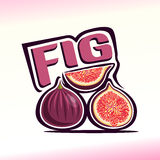 Vector illustration on the theme of fig. Abstract vector illustration on the theme of fig Royalty Free Stock Images