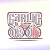 Vector illustration on the theme of  garlic Stock Photography
