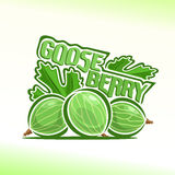 Vector illustration on the theme of gooseberry Stock Image