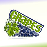 Vector illustration on the theme of  grapes Stock Photography