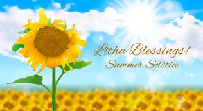 Sunny landscape with a field of sunflowers. Summer solstice. Vector illustration on the theme of the summer solstice. Sunny realistic summer landscape with a Royalty Free Stock Images