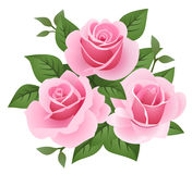Vector illustration of three pink roses. Stock Photos