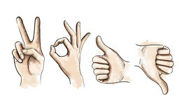 Vector Illustration of Thumbs up and down Set of  gestures by hands.  Stock Photos