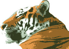 Vector illustration of Tiger royalty free stock image