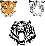 Vector  illustration of a tiger s face Royalty Free Stock Photo