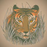 Vector illustration of a tiger's face in jungle grass. Royalty Free Stock Photography