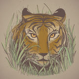 Vector illustration of a tiger's face in jungle grass. Royalty Free Stock Image