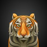 Vector illustration of tiger Royalty Free Stock Images